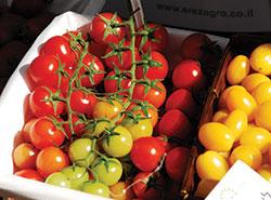 עגבניות שרי (Udi Steinwell)