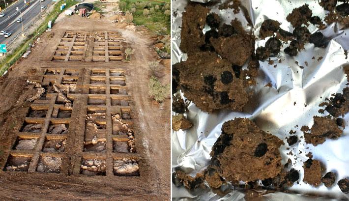 מימין: זרעי הפול המבויתים הקדומים ביותר המוכרים בעולם שנמצאו באחיהוד (קובי ורדי, באדיבות רשות העתיקות) משמאל: אתר החפירה באחיהוד, בו נמצאו זרעי הפול המבויתים הקדומים בעולם (חברת Skyview, באדיבות רשות העתיקות)